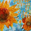 Sunflowers In Fields by Pam Halliburton