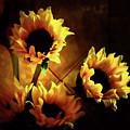 Sunflowers In Shadow by Roberta Byram