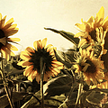 Sunflowers In Tone by Glenn McCarthy Art and Photography