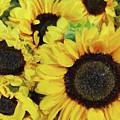 Sunflowers by Jeff Breiman