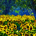 Sunflowers No2 by Michael Thomas
