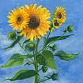 Sunflowers On Bauer Farm by Paula Emery