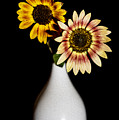Sunflowers On Black Background And In White Vase by Vishwanath Bhat