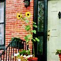 Sunflowers On Stoop by Susan Savad