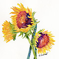 Sunflowers On White by Renee Chastant