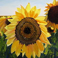 Sunflowers Squared by Lea Novak