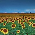 Sunflowers Under A Stormy Sky By Denver Airport by John De Bord