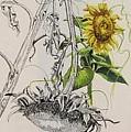 Sunflowers by Wanda Dansereau