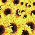 Sunflowers Watercolor Field  by Irina Sztukowski