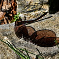 Sunglasses On Stone by Cathy Harper