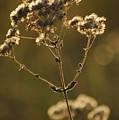 Sunkissed by Lori Mellen-Pagliaro