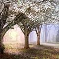 Sunlight In The Meadow by Debra and Dave Vanderlaan