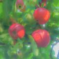 Sunlight On Apples by Bill McEntee