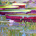 Sunlight On Lily Pads by John Lautermilch