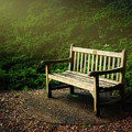 Sunlight On Park Bench by Tom Mc Nemar