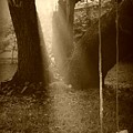 Sunlight On Swing - Sepia by Carol Groenen