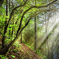 Sunlight On The Trail by Debra and Dave Vanderlaan