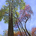 Sunlight On Upper Branches by John Lautermilch