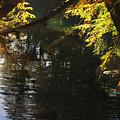 Sunlight Reflections by Darlene Bell