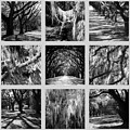 Sunlight Through Live Oaks Collage by Carol Groenen