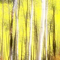 Sunlit Aspen Grove by LeAnne Perry