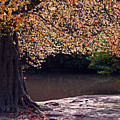 Sunlit Autumn Canopy by Bel Menpes