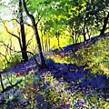 Sunlit Bluebell Wood by Paul Dene Marlor