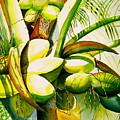 Sunlit Coconuts by Elizabeth Ferris