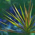 Sunlit Dracaena Marginata by HH Photography of Florida