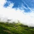 Sunlit Hillside by Lexi Heft