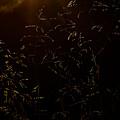Sunlit by Lara Morrison