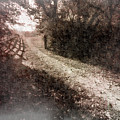Sunlit Pathway by Jim Love