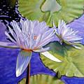 Sunlit Petals by John Lautermilch