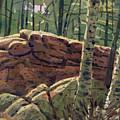 Sunlit Rocks by Donald Maier