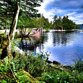 Sunlit Shore At Covewood by David Patterson
