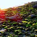 Sunlit Stones by Ed Weidman