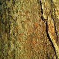 Sunlit Tree Bark by Anne Kotan
