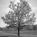 Sunlit Tree by Paul  Trunk