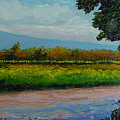 Sunlit Vinyard by Fred Wilson