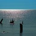 Sunlit Waters by Rrrose Pix