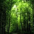 Sunlit Woodland Path by Lars Lentz