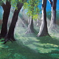 Sunlit Woods by Susan Michutka