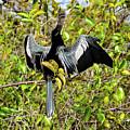 Sunning Anhingas Bird One by Bob Phillips