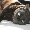 Sunning Black Cat by Brad Nellis