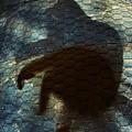 Sunning Shadow by David Sutter