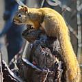 Sunning Squirrel by Crystal Massop
