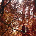 Sunny Autumn Day Poster by Carol Groenen