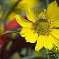 Sunny Blooms by Jeannie Burleson