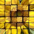 Sunny Composition by Christina Verdgeline