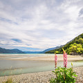 Sunny Day At Kinloch Wharf In New Zealand by Daniela Constantinescu